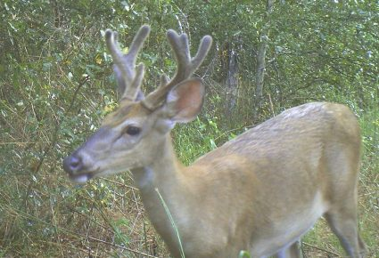 Grant County, AR Hunting Lease